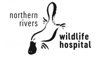 Northern Rivers Wildlife Hospital's logo