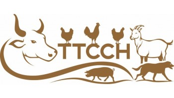 'Til The Cows Come Home's logo